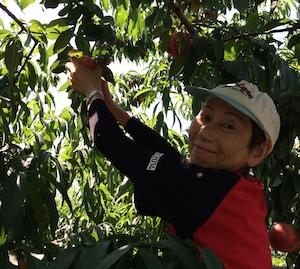 桃太郎も大満足の桃狩りツーリング 2015年7月11日