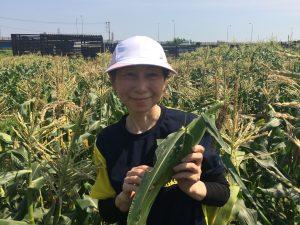 ぽんぽこ村でジャガイモ・トウモロコシ収穫体験 無農薬トウモロコシのもぎ立てを生で食べる!