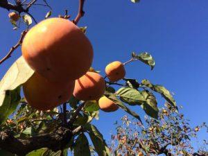 都内で果物狩りと、江戸東京たてもの園 「この秋一番の都内ツーリングコース」
