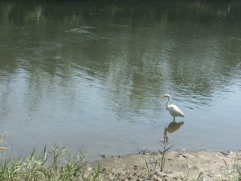 東京港野鳥公園訪問記…片道13キロの都内散歩ツーリングで自然満喫