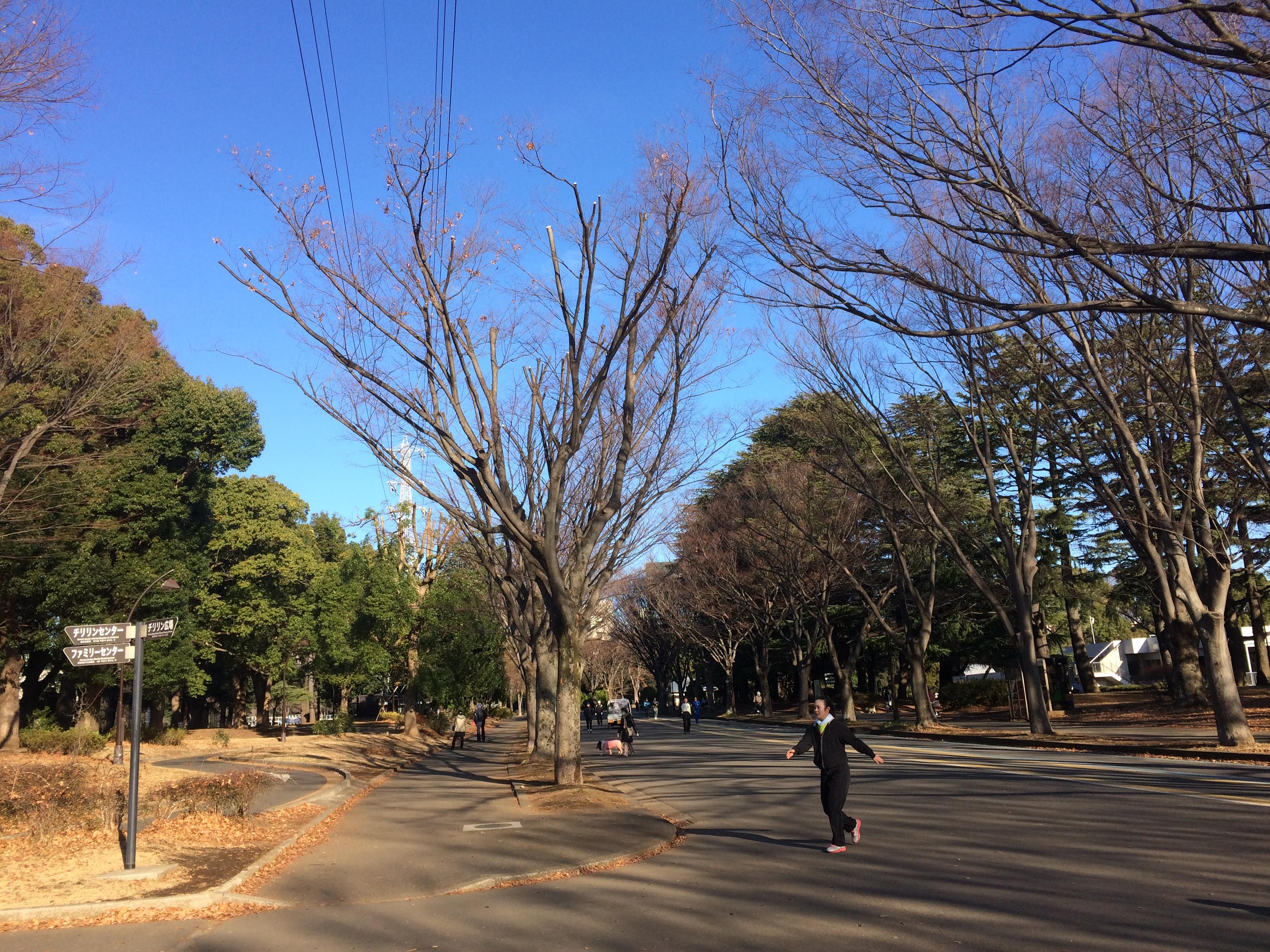アラ還マラソン練習日記 年末怒濤の6時間走!!!@駒沢公園