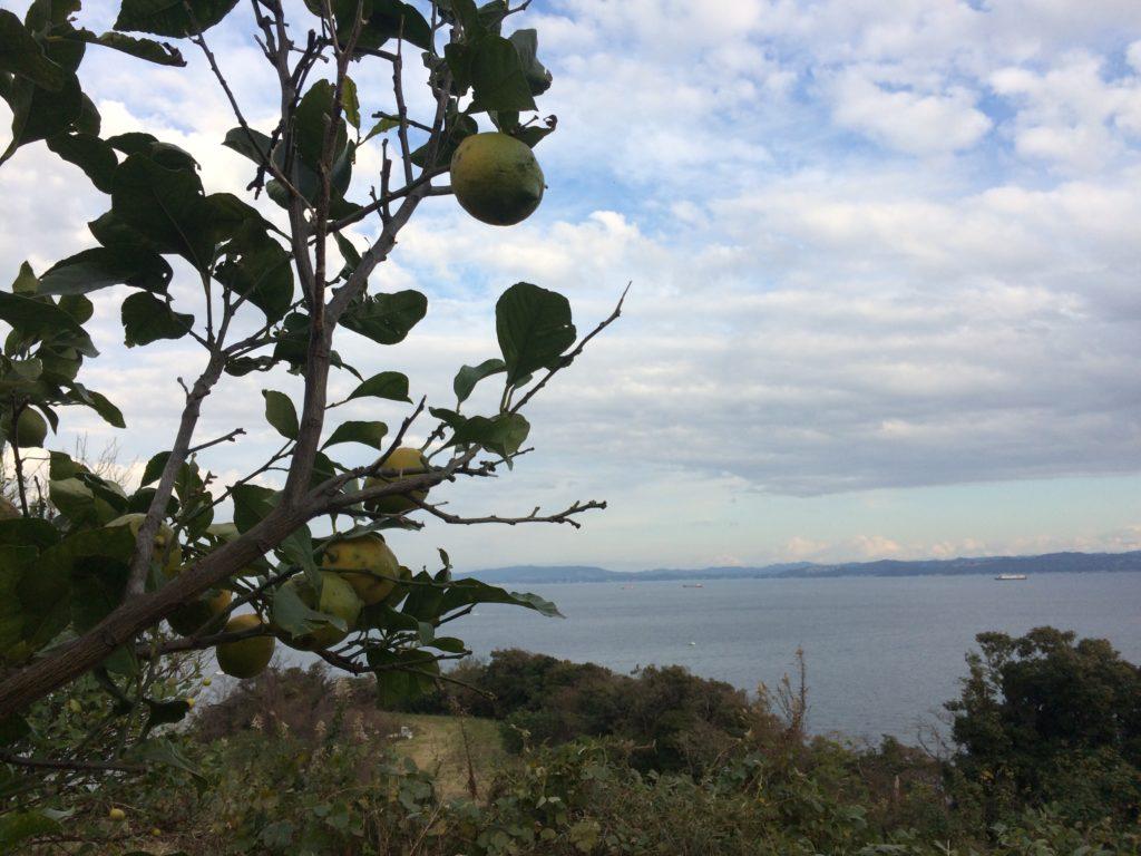 【東京近郊の果物狩り】ファーマシーガーデン浦賀で「レモン狩り」と「天然はちみつ」